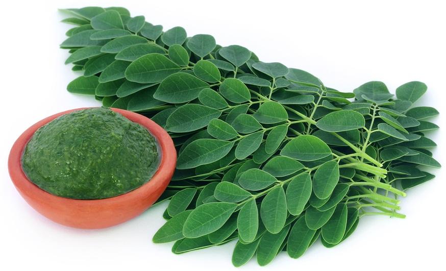 manfaat daun kelor bagi tubuh