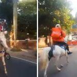 Driver Antar Makanan Kuda